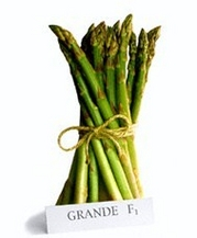 Green asparagus seed Grande F1 | Agriculture, forestry, livestock and fishing | Trees, plants and seeds for planting | Seeds for sowing | Img 1 | Tabdevi.com